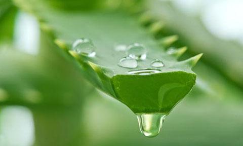 اینفوگرافی: ۶ گیاه دارویی پر طرفدار و خواص آنها
