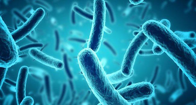 حقایقی در مورد باکتری