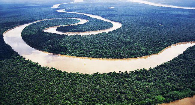 حقایقی در مورد جنگل آمازون